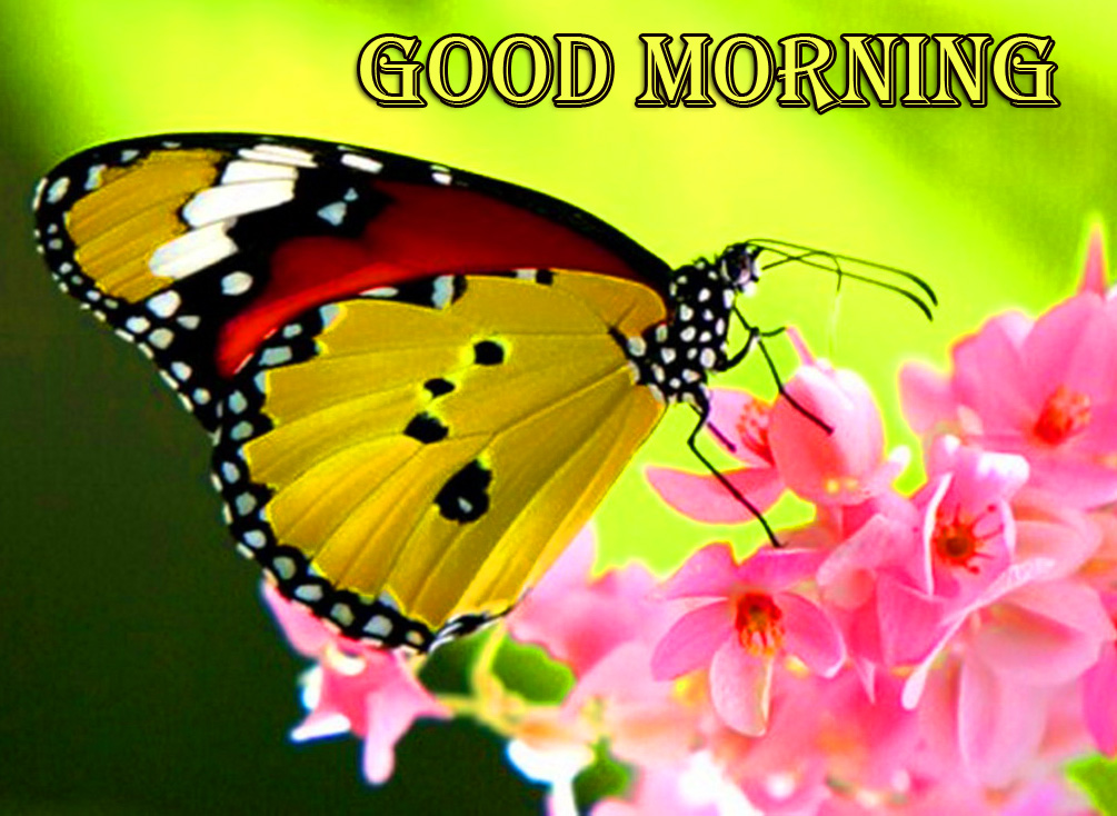 Pink Flowers with Butterfly and Good Morning Wish