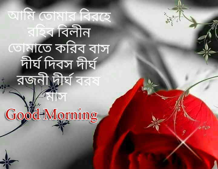 Red Rose Love Bengali Quote Good Morning Picture