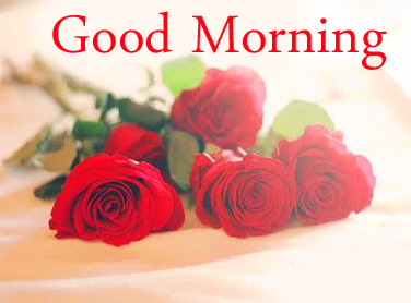 Red Roses Good Morning Image