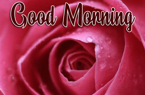 Rose Good Morning Picture