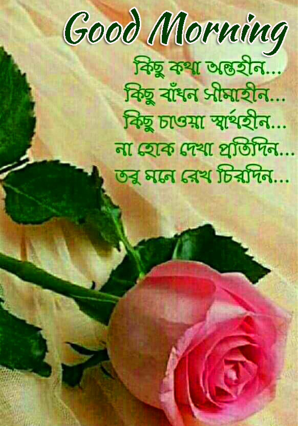 Rose with Bengali Quote and Good Morning Wish