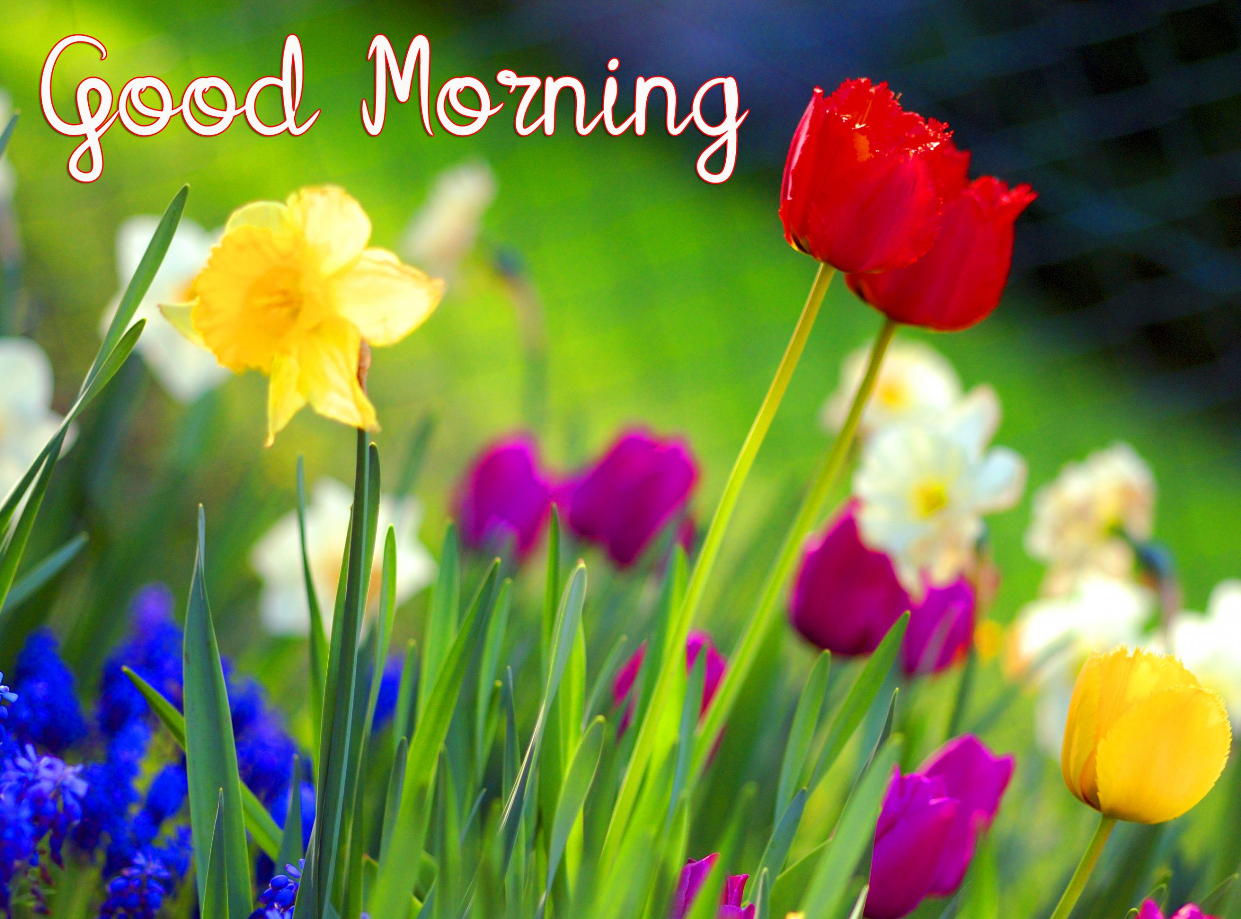 Spring Colorful Flowers Good Morning Image
