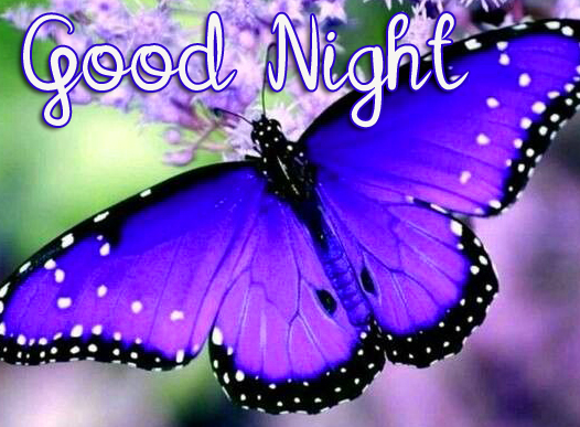 Sweet Butterfly Good Night Image