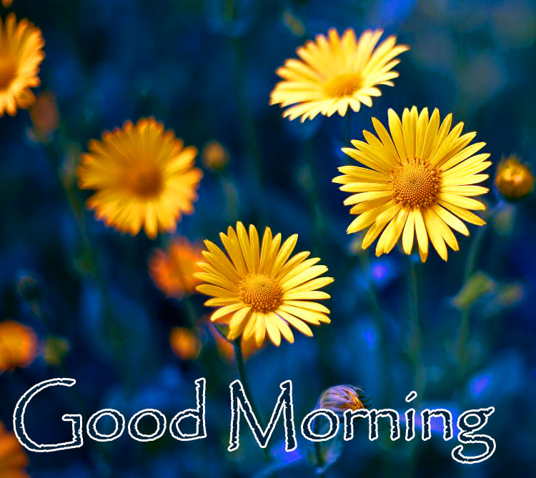 Yellow Small Flowers Good Morning Image