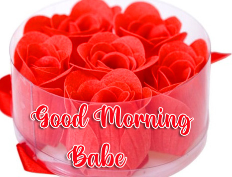 Blooming Red Roses Good Morning Babe Image