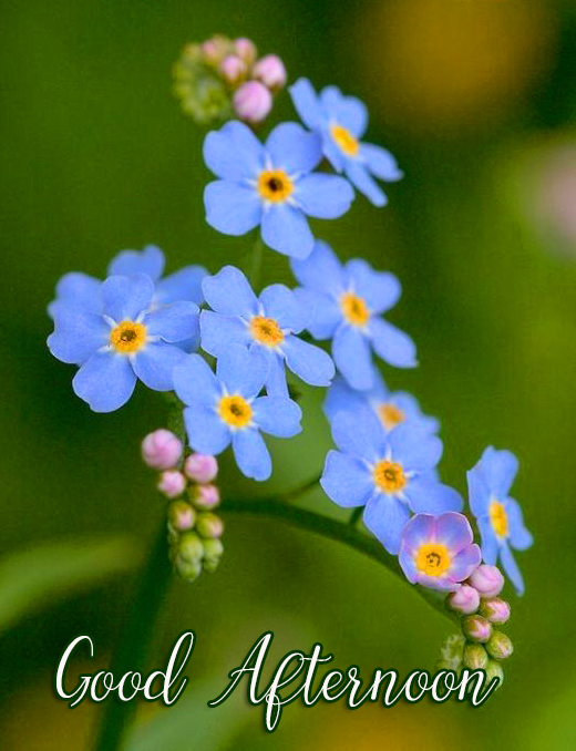 Blue Cute Flowers Good Afternoon Image