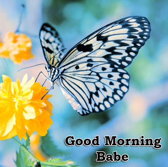 Butterfly Good Morning Babe and Flower Image