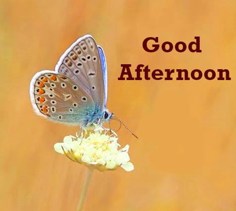 Butterfly and Cute Flowers Good Afternoon Image