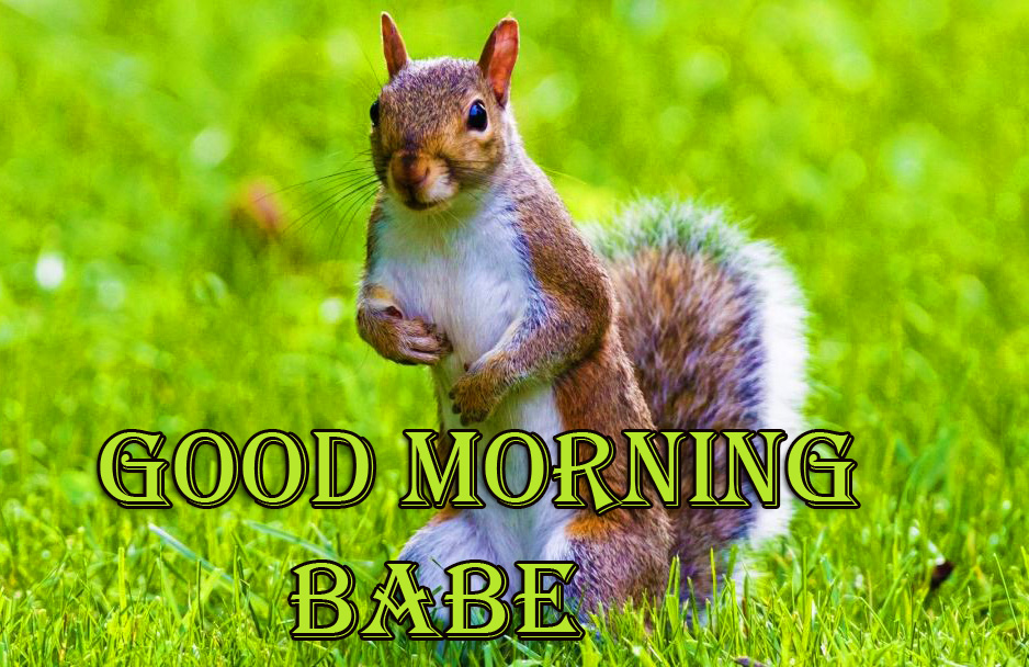Good Morning Babe Cute Animal Picture