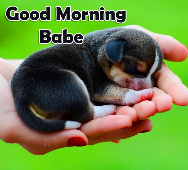 Puppy Cute Good Morning Babe Image