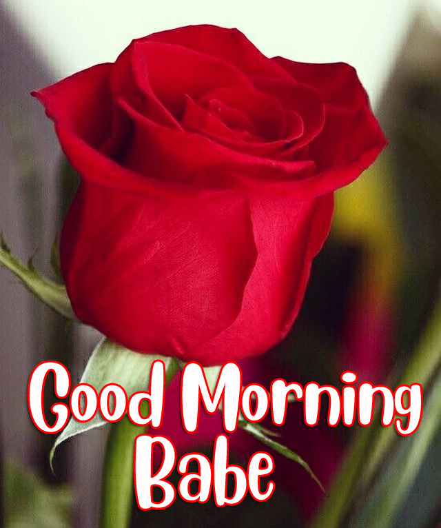 Red Rose Good Morning Babe Picture HD