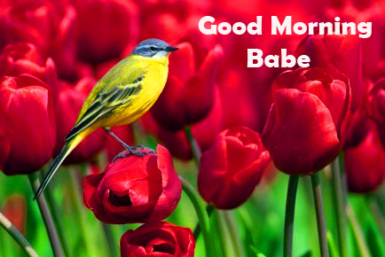 Red Tulips and Bird Good Morning Babe Image